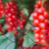 Fence Netting Nature Bird Netting Primo 10x10m