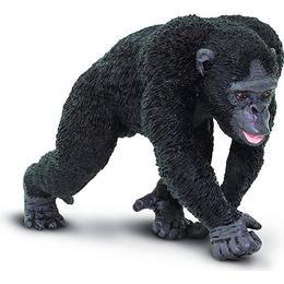 Safari Chimpanzee 224729