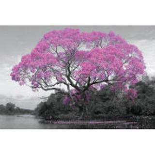 GB Eye Tree Blossom Maxi 61x91.5cm Posters