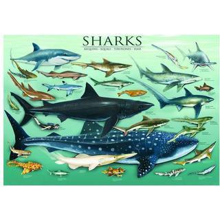 Eurographics Sharks 1000 Pieces